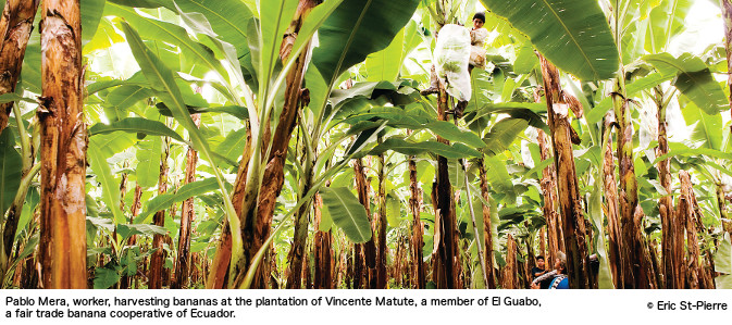 blood bananas chiquita in colombia Chiquita banana did not take into account numerous factors when they were  trying to sell their product the european union placed tariffs on.