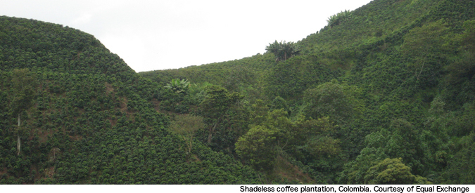 coffee_crop