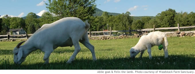 sheep_goats